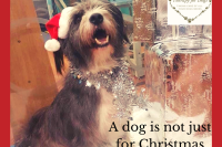 ENJOYING CHRISTMAS WITH YOUR DOG