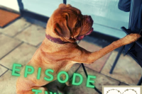 Tails of a dog trainer Episode 2